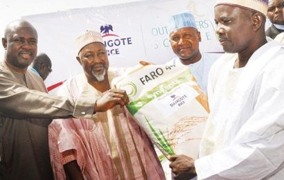 Dangote to Launch Its 25,000 Hectare Rice Outgrower Scheme in Sokoto