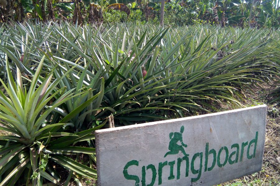 How SPRINGBOARD Rekindles Agriculture Passion by Pioneering Sustainable Agriculture and Organic Food Production In Rural Communities In Nigeria